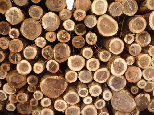 屋久島地杉を用いた構造材プログラム